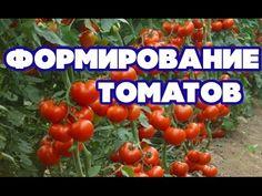 Формирование томатов - YouTube