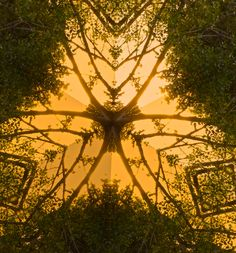 woodland wings - lia.eliades