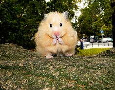 Hamsters grow on Trees (NEW MOVIE)