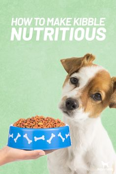 Are you on a budget?  If your dog is eating kibble here are the best ways to make it more nutritious for him ...  #1 Vary The Food #2 Read The Labels #3 Balance Gut Bacteria With Probiotics #4 Use Digestive Enzymes #5 Include Whole Food Nutrients #6 Add Omega-3 Fatty Acids  If you follow these easy steps you'll see improvements in energy, attitude and coat quality.  you might see that kibble wasn't so complete after all.  Get our full post on how to make kibble more nutritious here.