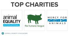 Top Charities