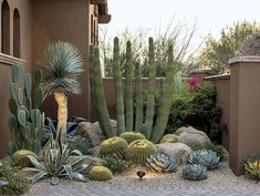 Cactus garden landscaping 50 fabulous side yard garden design ideas and remodel 42 beautiful front yard rock garden landscaping ideas Dessert Landscaping, Succulent Landscaping, Front Yard Landscaping, Succulents Garden, Landscaping Ideas, Arizona Landscaping, Arizona Backyard Ideas, Mulch Landscaping, Pergola Ideas