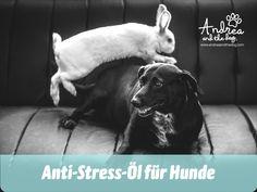 Dieses Öl zur innerlichen Anwendung hilft deinem ängstlichen oder gestressten Hund in vielen Situationen einen kühlen Kopf zu bewahren. Am Besten kombinierst du dieses Öl mit dem RELAX Spray - auch bei uns im Webshop!   #hunde #hundeliebe #hundepflege  #andreaandthedog #naturpur #chemiefrei #kraftdernatur #bioqualität #dogs #petcare #ohnekonservierungsstoffe #handmadewithlove #steiermark #besterfreunddesmenschen #antistress Labrador Retriever, Relax, Animals, Stressed Out, Labrador Retrievers, Animales, Animaux, Animal, Animais