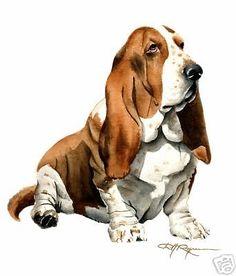 BASSET HOUND DOG Watercolor 8 x 10 ART Print Signed DJR #Realism