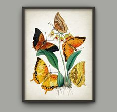 Antique Butterfly Art Print Set of 6 by QuantumPrints on Etsy