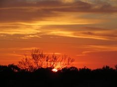 South Texas.... Photo by Linda Anderson