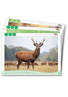 Sada 78 jednostranných obrázkových kariet na papieri (formát B5), s obrázkami vychádzajúcimi priamo z pracovnej učebnice Prírodoveda pre tretiakov. Prvá karta obsahuje zoznam všetkých obrázkových kariet. Obrázkové karty sú farebne odlíšené podľa vybratých tematických okruhov v danom ročníku. Moose Art, Animals, Animales, Animaux, Animal, Animais, Dieren