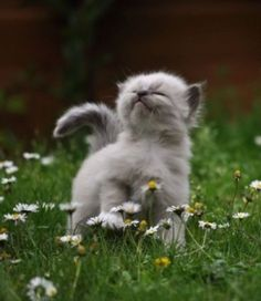 One happy kitty. Just smelling the daisies...