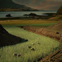 Á beit by Sverrir Thorolfsson on Flickr.