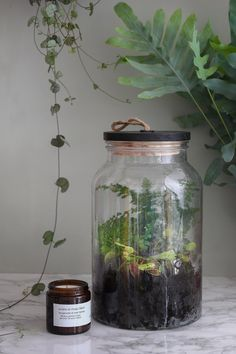 DIY closed terrarium: step by step to create a garden under glass – Cactus Mini Terrarium, Terrarium Plants, Glass Terrarium, Terrarium Closed, Open Air, Terraria, Bedroom Plants, Cactus Flower, Cool Plants