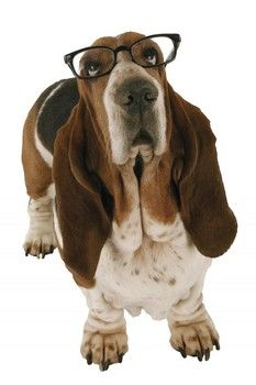 Dog IQ test.. how smart is your pooch?