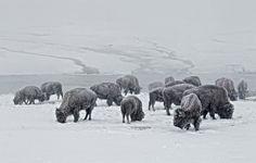 """earth-song:    """"Winter Herd"""" by Ignacio Yúfera"""