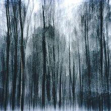 Fototapete - Surreal Wood
