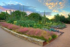 Desert Botanical Garden Ottosen Entry Garden Worth a visit because: It features the nation's largest collection of arid-adapted plants that focus on the Sonoran Desert.