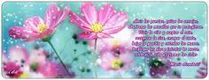 El Poder de una delicada Flor: abril 2013