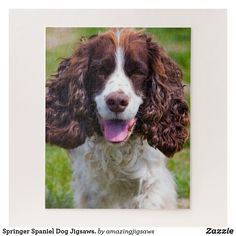 Shop Our Springer Dog Our Family Pet Jigsaw Puzzle created by amazingjigsaws. Springer Dog, Springer Spaniel, Spaniel Dog, Spaniels, Pet Dogs, Pets, Purebred Dogs, Types Of Dogs, Make Your Own Puzzle