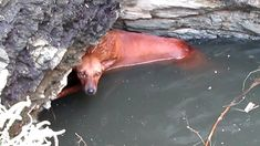 Again Animal Aid India. Thank god there re people who do value animal life. Rescue of exhausted dog clinging for life in a deep well