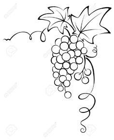 46 En Iyi üzüm Salkımı Görüntüsü Grape Vines Vines Ve Vineyard Vines