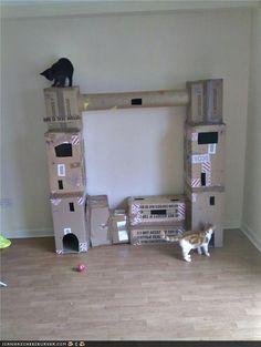 Não é tão bonito assim, mas parece que os gatos nem se importam com isso... via