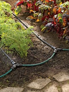Soaker Hose Drip Irrigation System for Garden Rows. Measure out the length you need for each row, connect the hoses together and it will water for you! Connect this to a timer for nearly hands free garden watering. FABULOUS IDEA!