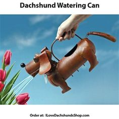 Dachshund Watering Can