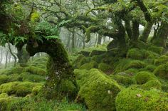 The moss-covered forests of Dartmoor, England by Duncan George