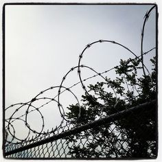 Barbed wire thesis