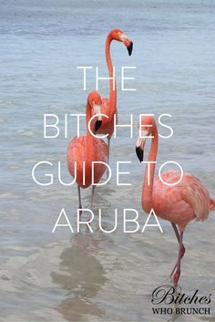 Find out where to eat, stay, and play in Aruba!