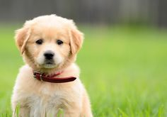 Image from http://media.mydogspace.com.s3.amazonaws.com/wp-content/uploads/2013/08/puppy-500x350.jpg.