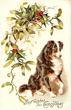 Vintage Christmas Border Collie postcard