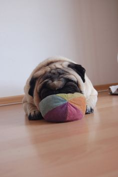 Always nap with your cushy ball ~ and always be ready to play when you get up from your nap...