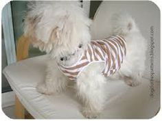 free dog patterns for very small dogs jackets and jerseys - Google Search