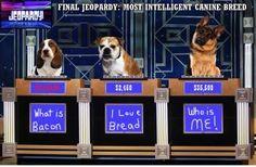 The smartest dog!