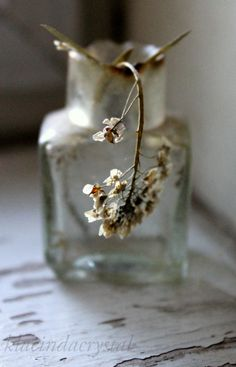 by Ana Rosa Wabi Sabi, Growth And Decay, Deco Floral, Japanese Aesthetic, Bottles And Jars, Glass Bottles, Still Life Photography, Floral Photography, Macro Photography