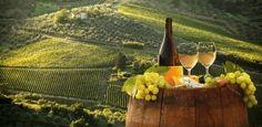 Procurando o melhor vinho Chardonnay do século? Ele está no Canadá