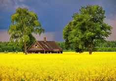 Nevada, Lithuanian Flag, Las Vegas, Farms Living, Far Away, Places To Visit, Landscape, Country, House Styles