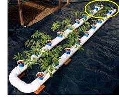 homemade hydroponics system (This is a self-contained hydroponic system with the reservoir, pump, and air stones all in the tubing. This looks like it would be quite fun to try. No fish, though. Purely hydroponic.)