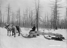 horse drawn sled images | Horse Drawn Logging Sled in Michigan MI Photo Picture | eBay