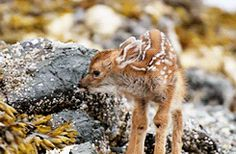 Bambi, revisited…  imgfave - amazing and inspiring images