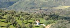 The Greek Olive Estate - Healthy olive oil