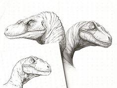 Jurassic World: Raptor Sketches designed by Pilot. Connect with them on Dribbble; Jurassic Ark, Jurassic Park Raptor, Jurassic World Raptors, Jurassic Park World, Dinosaur Sketch, Dinosaur Art, Fantasy Wesen, Raptor Dinosaur, Extinct Animals