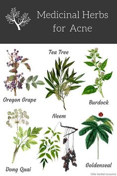 Herbs for Acne Treatment and Prevention. # Skin Care illustration acne treatment Herbs for Acne Treatment and Prevention Healing Herbs, Medicinal Plants, Natural Healing, Natural Skin, Natural Beauty, Acne Treatment At Home, Natural Acne Treatment, Face Treatment, Gardening