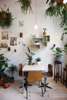 Decorating the wall and ceiling with small plants to add a green touch