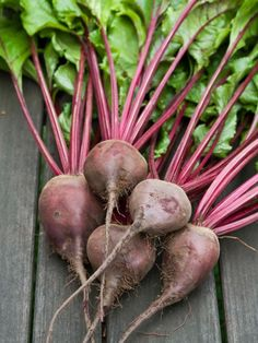 Plant these hearty vegetables now for a bountiful harvest come fall.