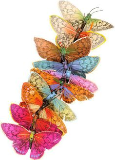#Colorful_pictures #colors #butterflies
