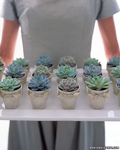 These rosette-shaped 'Echeveria' resemble a favorite cut flower, but the similarity ends there. The hardiness of the succulent plant is unequaled and will leave guests with a lasting and easy-to-care-for reminder of your wedding—all they need is good drainage and sun.