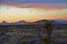 A desert evening at Big Bend National Park in Texas. (Photo submitted by James Mangum)