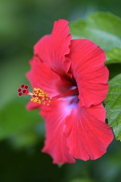 ~~Hibiscus flower by Lonely Planet Images~~