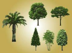 Conjunto de árboles realistas