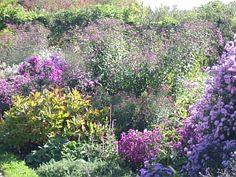 Gartengestaltung mit Stauden  http://www.hobbygarten.de/gartengestaltung/gartenstauden/